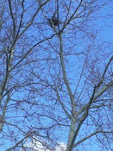 Vogelnest im Baum